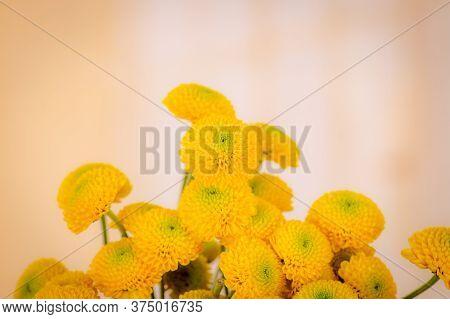 Close Up Of A Bouquet Of Yellow Chrysanthemum Variety, Studio Shot, Yellow Summer Flowers