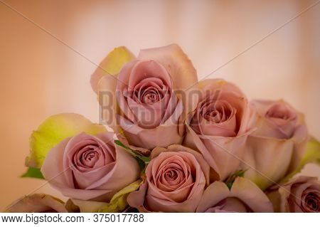 Close Up Of A Bouquet Of Pink Mondial Roses Variety, Studio Shot, Pink Flowers