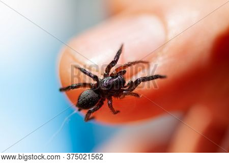 A Small Poisonous Spider On The Arm