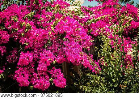 Colors Of Cyprus