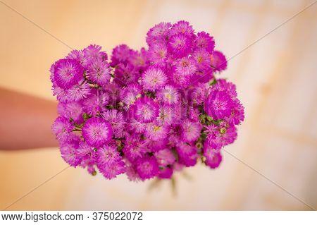 Women Hand Holding A Bouquet Of Astee Blue Summer Flowers Variety, Studio Shot, Pink Flowers