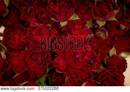 Close Up Of A Bouquet Of Butterfly Sensation Spray Roses Variety, Studio Shot, Red Flowers