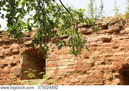 Fragment Of Defense Brick Wall Of Mediaeval Fortress, Apple Tree Branch With Unripe Apples On A Fore
