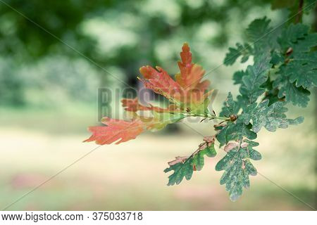 Close Up Of Tree Leaves Nature Background. Nature Background Of Tree Leaves. Tree Leaves Nature Back
