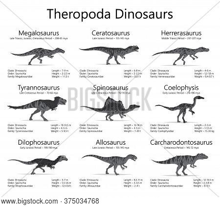 Theropoda Dinosaurs. Monochrome Vector Illustration Of Dinosaurs Isolated On White Background. Set O