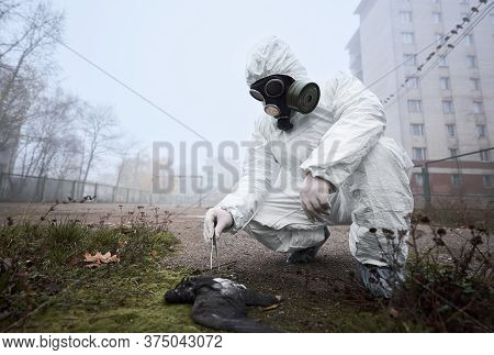 Research Scientist In Protective Uniform Holding Tweezers And Examining Dead Pigeon. Male Environmen
