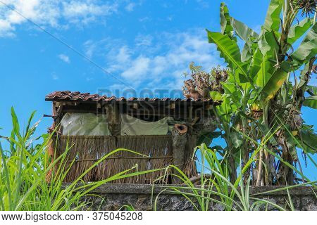 Traditional Farmer Hut In The Rice. A Hut For Farmers To Shelter In The Middle Of Lush And Green Ric