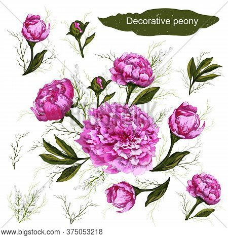A Set Of Botanical Decorative Elements. Pink Peony Flowers, Leaves, And Buds Are Hand-drawn In A Rea
