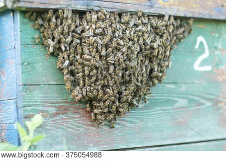 Bees Fly Out And Return To The Hive In The Summer. Flight Of Bees Near The Hive In The Garden.