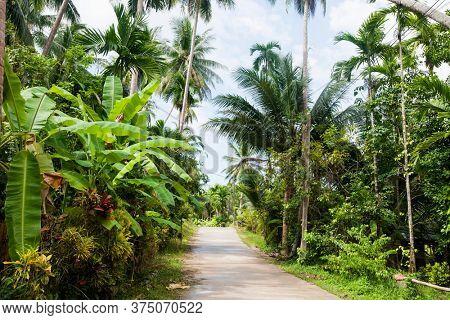Unpaved road along trees Koh Pha Ngan Thailand