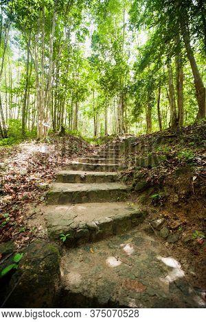 Path through forest; Koh Pha Ngan; Thailand