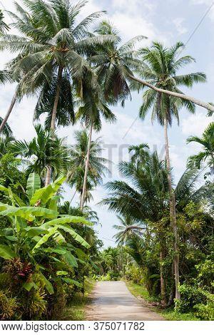 Unpaved road along tropical trees; Koh Pha Ngan Thailand
