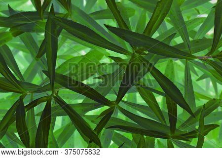 Dark Green Mystical Floral Background. Long, Narrow And Chaotic Foliage With Raindrops. Magical Myst