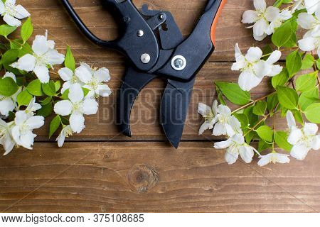 Garden Pruner And Cut Branch Of Flowers On Wooden Boards. Garden Tools And Equipment. Top View.