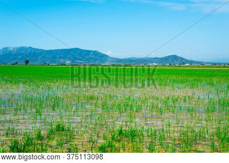 a view of a flooded paddy field in the Ebro Delta in Deltebre, Catalonia, Spain