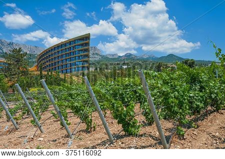 Scenic View To Stunning Valley With Luxury Modern Hotel Surrounded By Vineyards With Young Grapevine
