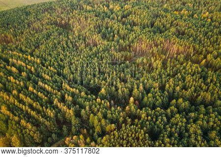 Aerial View Of Green Forest Landscape. Top View From High Attitude In Autumn Evening. Natural Backdr