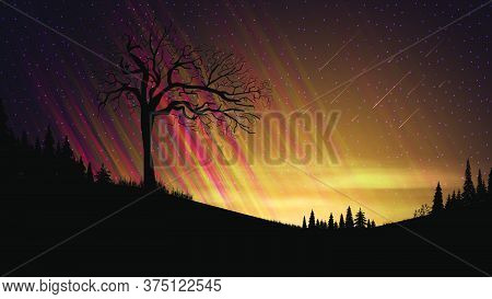 Evening Landscape With Orange Sunset, Starry Sky, Clouds, Fields With Coniferous Trees And Old Alone