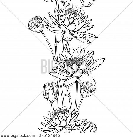 Vector Vertical Seamless Pattern With Outline Lotus Or Water Lily Flower, Bud And Seed Pod In Black