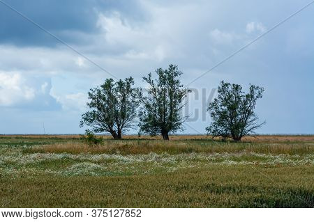 Three Trees In A Meadow With The Blue Ocean In The Background. Dark Clouds. Strong Winds. The Pictur