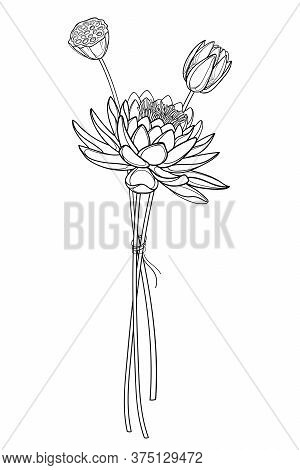 Vector Bouquet Of Outline Ornate Lotos Or Water Lily Flower, Bud And Seed Pod In Black Isolated On W