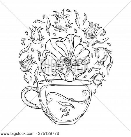 Vector Round Bunch Of Outline Roselle Or Hibiscus Sabdariffa Or Carcade Herbal Tea With Fruits And F