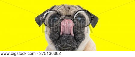 cute pug puppy with big eyes wearing glasses, looking up and licking nose on yellow background