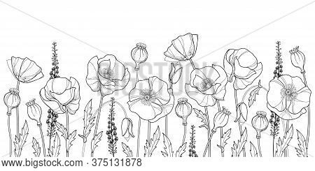 Vector Field With Outline Poppy Flower, Bud, Leaves And Seed Pod In Black Isolated On White Backgrou