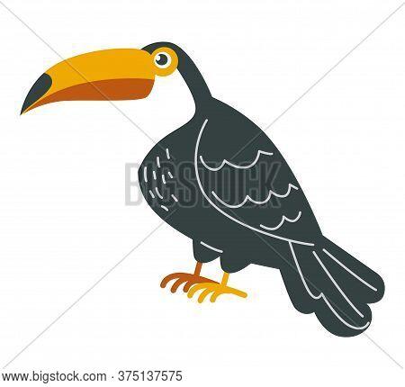 Toucan Bird, Tropical Fauna With Black Plumage Vector
