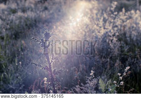 The Prickly Plant Stretches And Enjoys The Sun In The Natural Flow Of Light. Natural Background. The