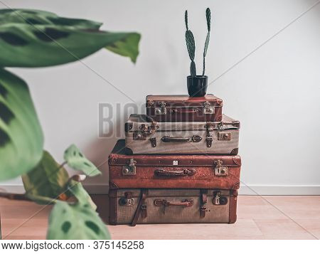 Vintage Interior With Reused Old Suitcases And An Opuntia Cactus