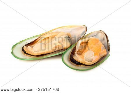 Two Female New Zealand Greenshell Mussels Studio Isolated On White Background
