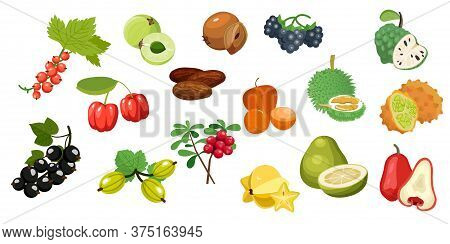 Set Fruits. Amla, Barbados Cherries, Currant, Custard Apple, Dates Fruit, Durian, Gooseberry, Kiwano