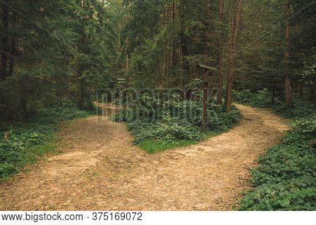 Moody Forest Landscape Nature Scenery Environment Space With Two Dirt Ground Trails For Walking And
