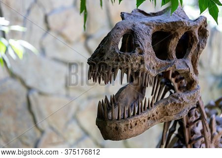 Close-up Of An Ancient Skull Of A Predatory Dinosaur. Excavations Dinosaurs
