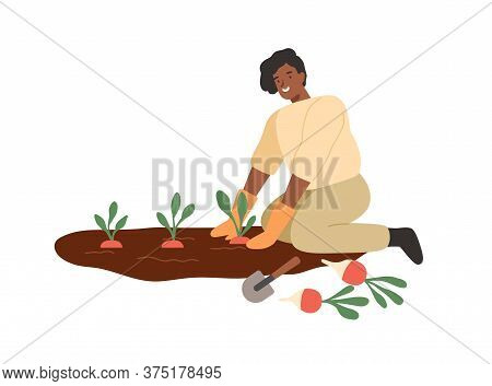 African American Smiling Woman Gathering Harvest On Vegetable Patch Vector Flat Illustration. Female