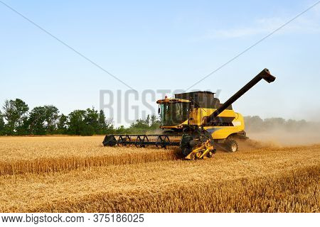 Combine Harvester Working In Wheat Field With Clear Blue Sky. Harvesting Machine Driver Cutting Crop