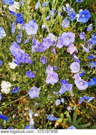 Blue Flower Bells As Very Nice Background
