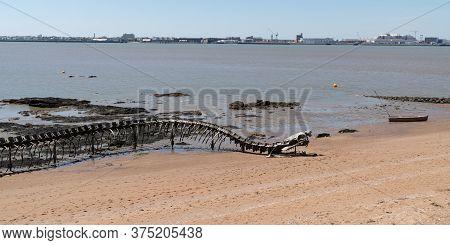 Saint-brevin , Aquitaine / France - 04 26 2020 : Ocean Snake In Saint Brévin Les Pins Sand Beach Fre