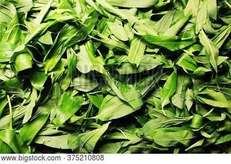 Wild Garlic Texture