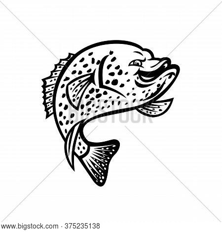 Black And White Mascot Illustration Of A Crappie, Papermouth, Strawberry Bass, Speckled Bass, Specks