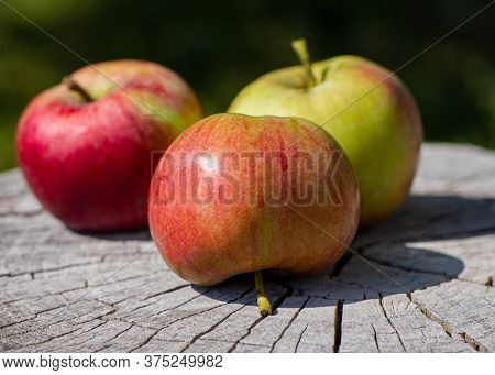 Group Of Ripe Fruits Of Apples Lie On A Wooden Surface Outdoors. Cooking Food.