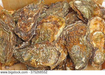 Big Bunch Of Raw Rock Oysters Seafood Clams