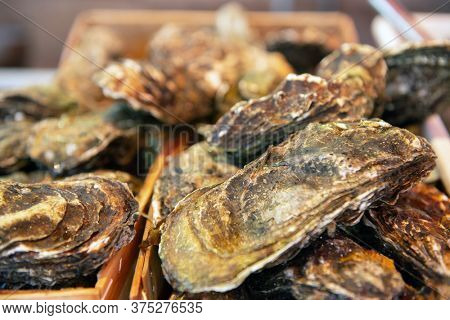 Fresh oysters sale on outdoor market in Sicily, soft focus. Restaurant delicacy. Saltwater oysters