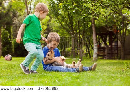 Brothers Play In The Yard With Your Favorite Dog