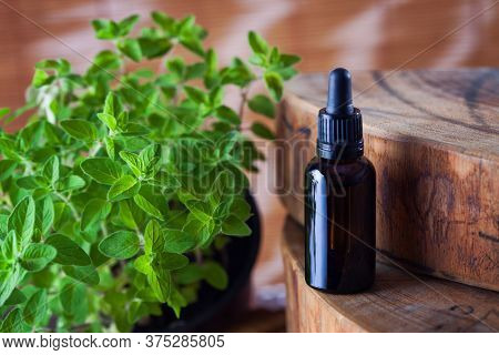 oregano essential oil and fresh leaves - beauty treatment