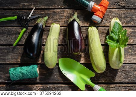 Eggplant And Squash And Gardening Tools On Garden Table Flat Lay Background.