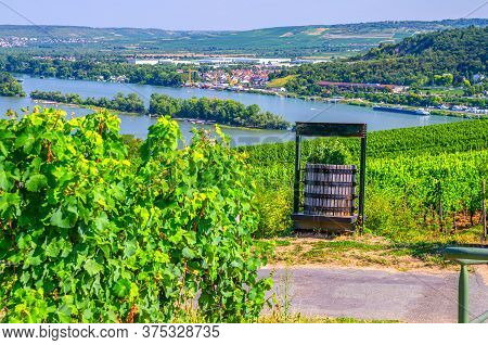 Wooden Grape Barrel In Vineyards Green Fields With Grapevine Rows And On Hills Of River Rhine Valley