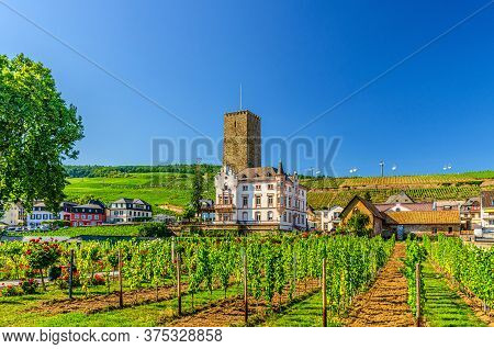 Vineyards Green Field With Grapevine Wooden Poles And Stone Tower Building In Rudesheim Am Rhein His