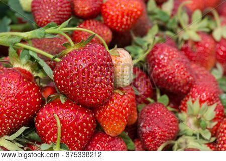 Red Fresh Strawberries